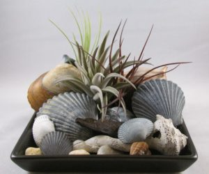 Air Plants With Sea Shells and Stones in a Dish